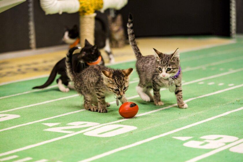 KittenBowl3_0472.jpg
