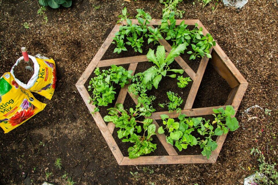 DIY Hexagon Planter