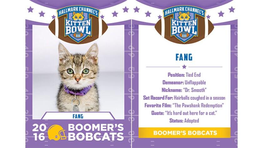 Fang-bobcats-KBIII.jpg