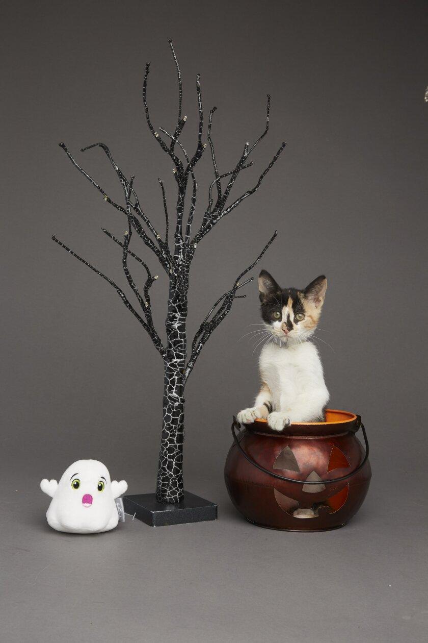 Kitten Bowl VI: Fall Kittens - 5