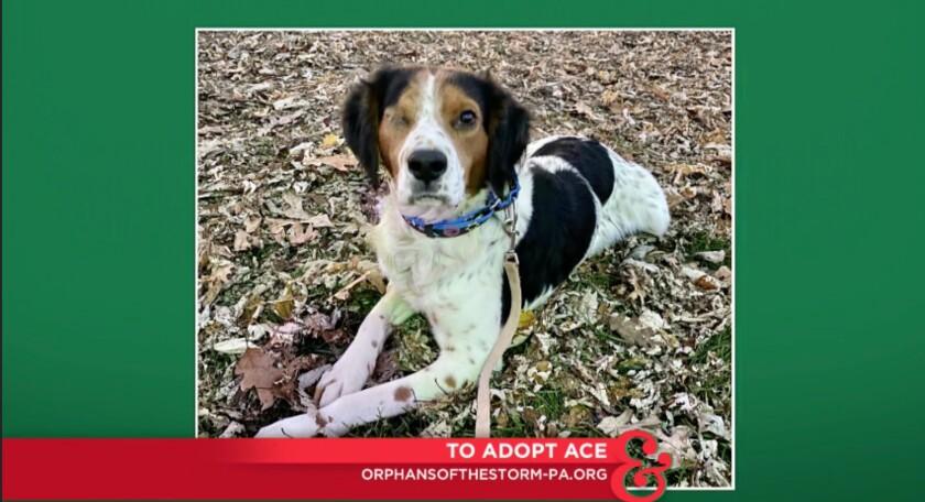 9050_pet_adoption_Ace.jpg