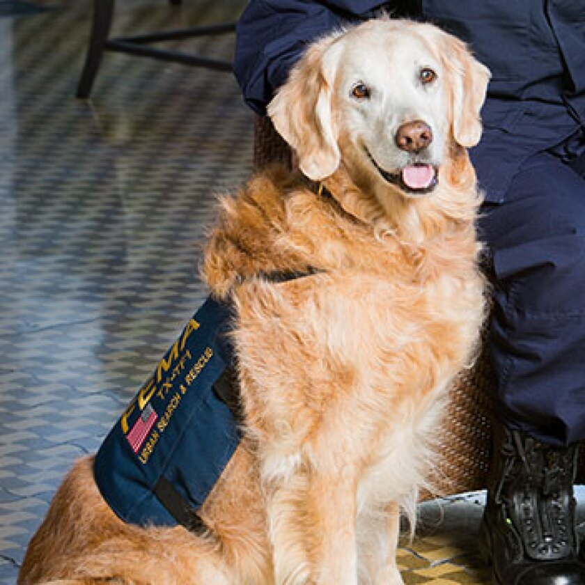 Search-and-Rescue-Dogs-Bretagne-352x352.jpg