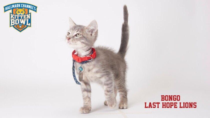 meet-the-kittens-KBV-LHL-Bongo.jpg