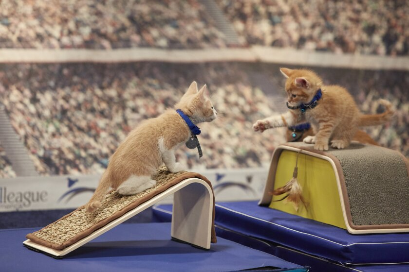Check out photos from the Hallmark Channel Kitten Summer Games Track & Field event!