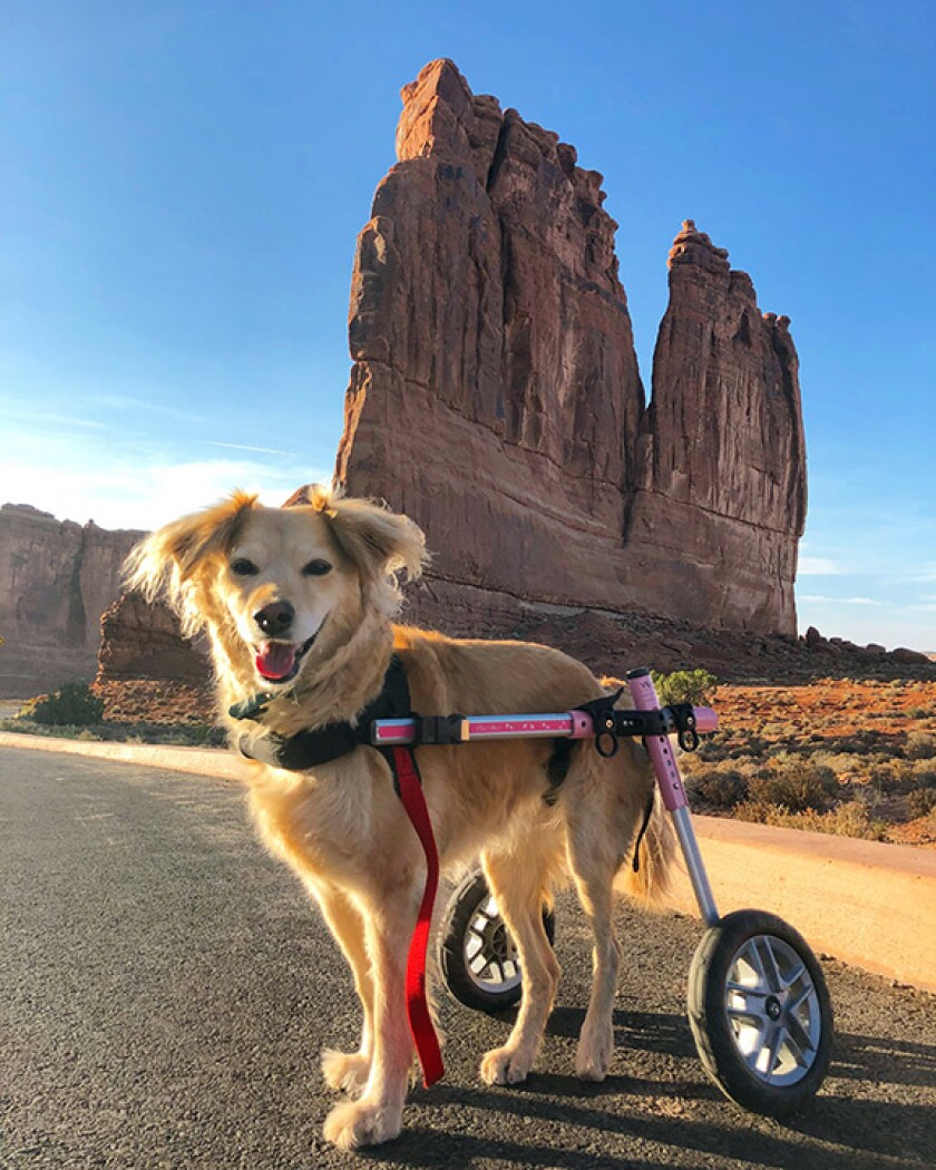 Scooty---Special-Needs---moab-MTD.jpg
