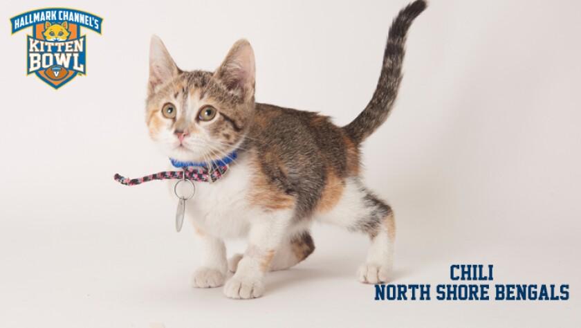 meet-the-kittens-KBV-NSB-Chilli.jpg