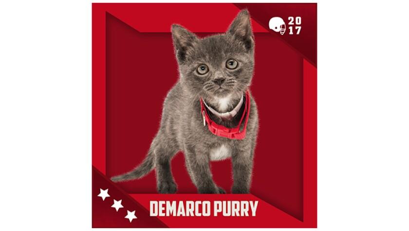 Kitten Bowl IV Emojis - Boomer's Bobcats - Demarco Purry