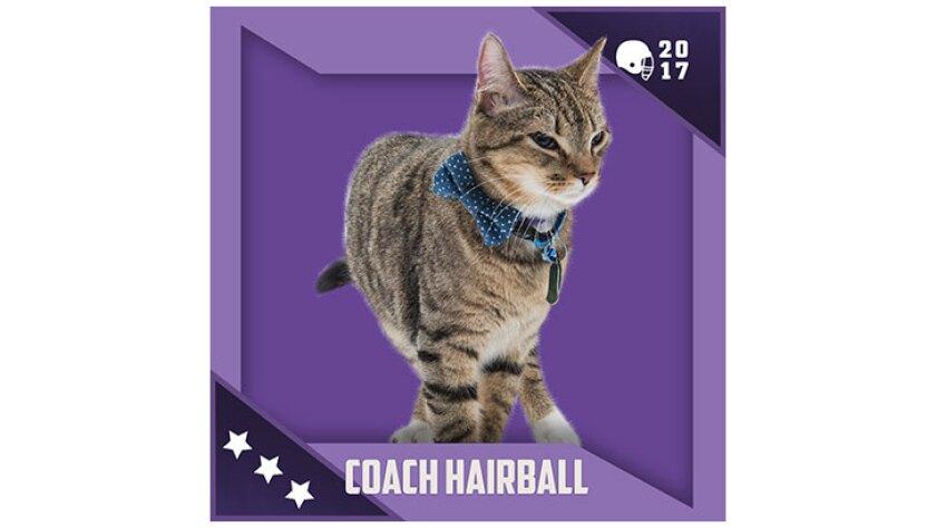 Kitten Bowl IV Emojis - North Shore Bengals - Coach Hairball