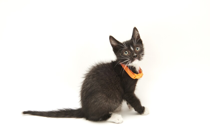 Kitten Bowl IV Photos - Home & Family Felines - 2
