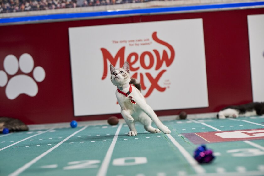 Photos from Cat Bowl - 12