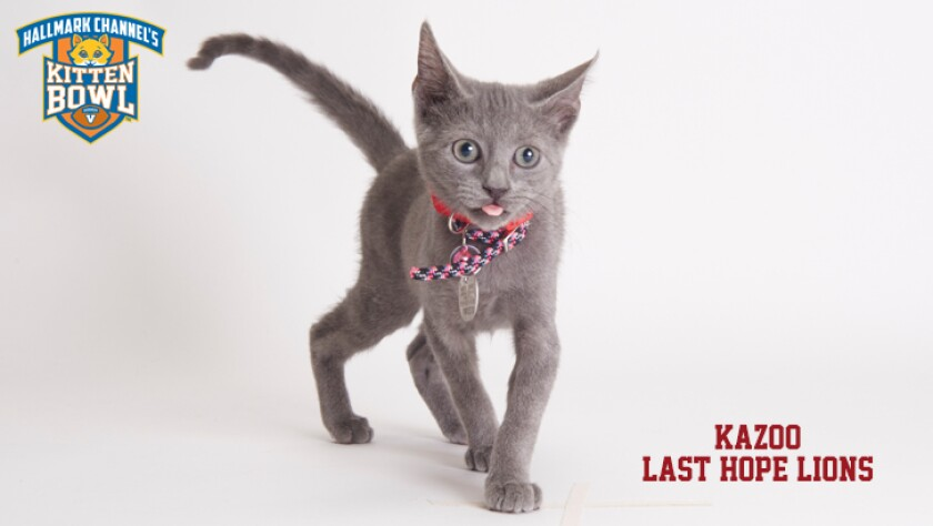 meet-the-kittens-KBV-LHL-Kazoo.jpg
