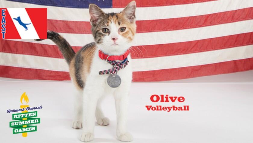 KittenSummerGames_726x410_Olive.jpg
