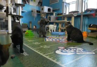Kitten Cam Highlights - Pouncing Around - Kitten Bowl IV