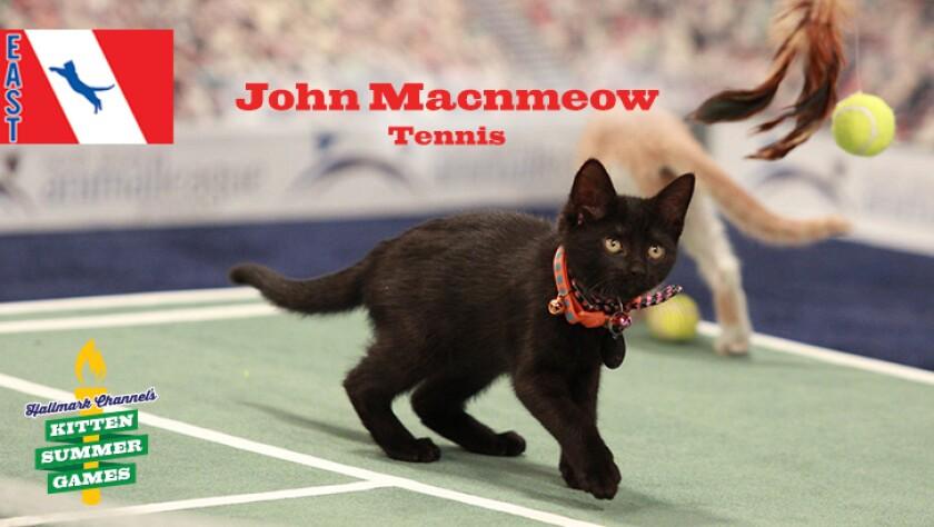 KittenSummerGames_726x410_JohnMacnmeow.jpg