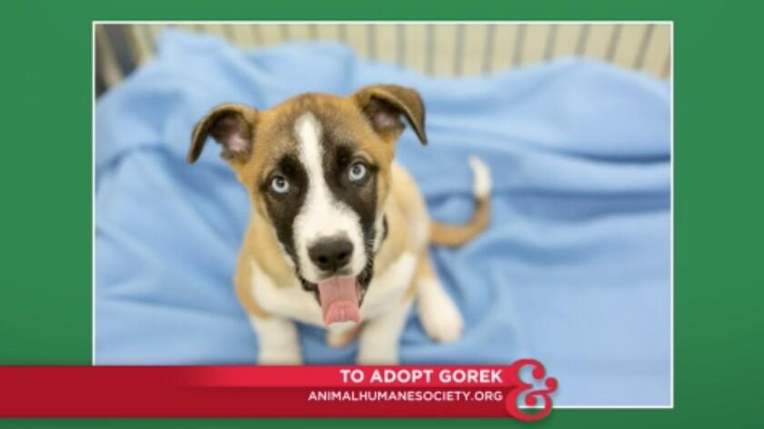 9054_pet_adoption_gorek_2.jpg