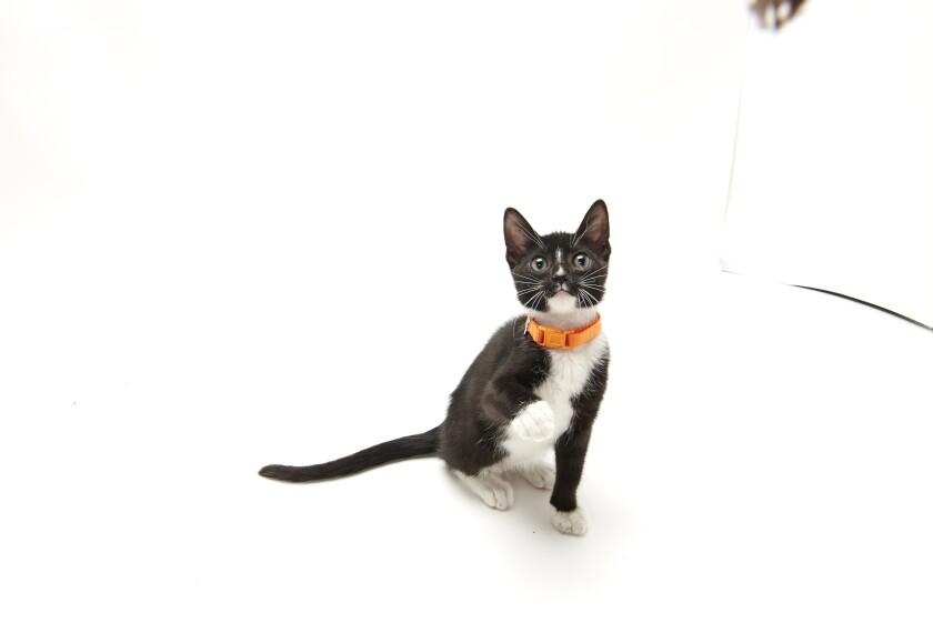 Kitten Bowl IV Photos - Home & Family Felines - 7