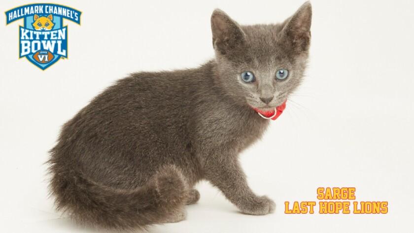 LHL-SARGE-meet-the-kittens-KBV.jpg