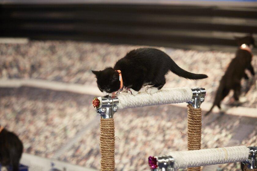 KittenSummerGames_0063.jpg