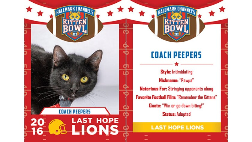 CoachPeepers-lions-KBIII.jpg