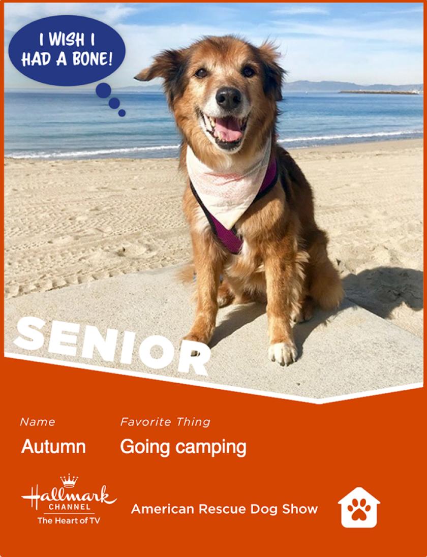 Autumn-senior.png