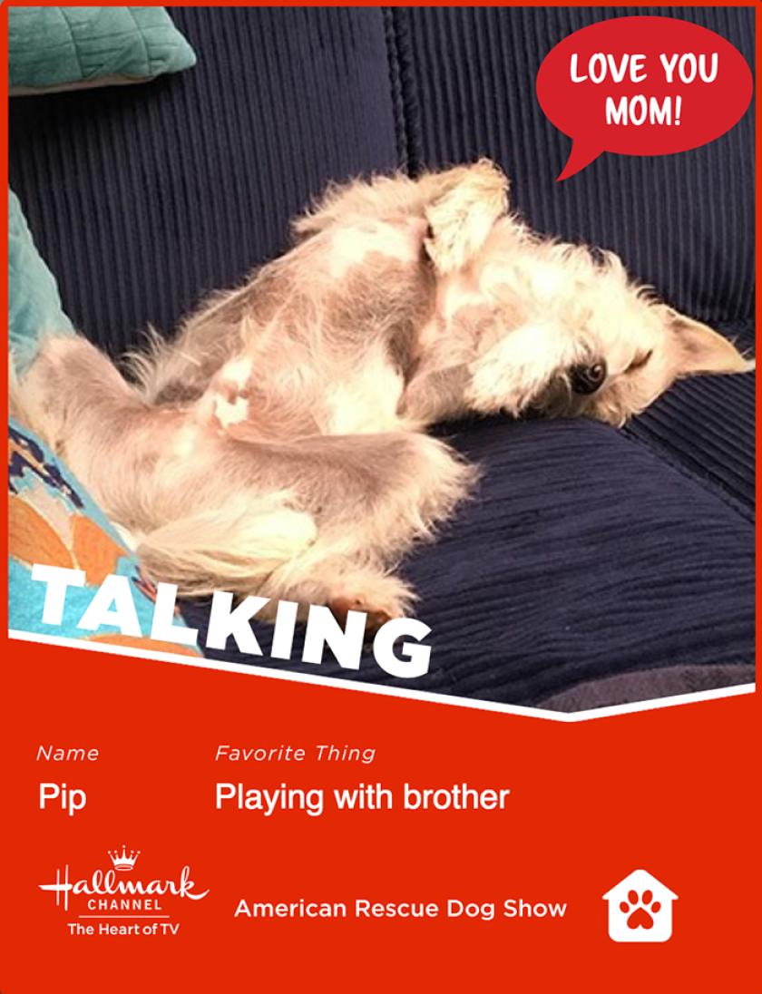 Pip-talking.png