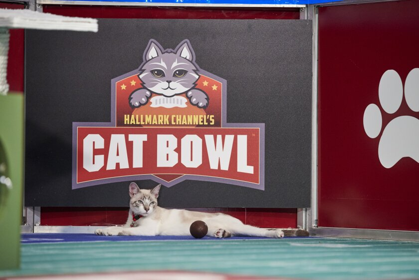 Photos from Cat Bowl - 10