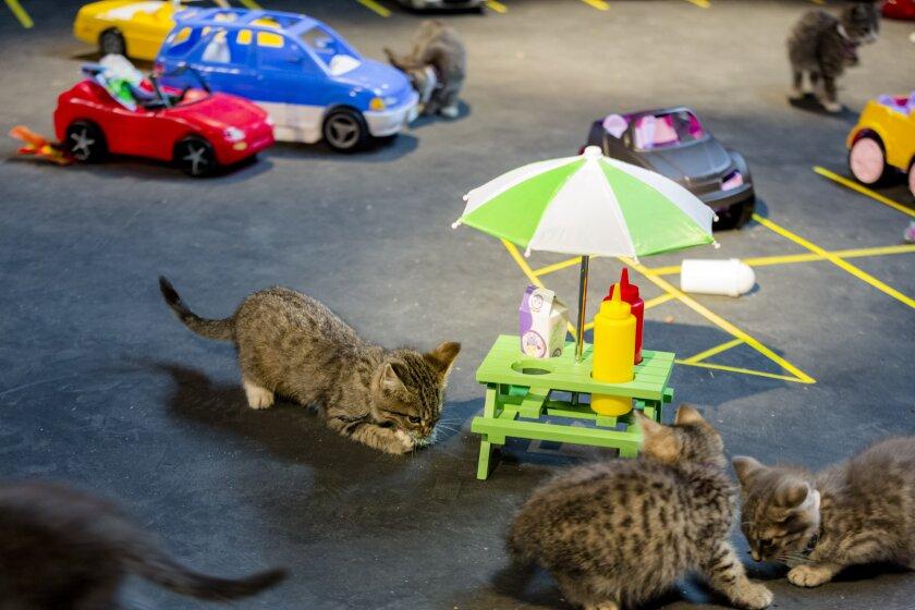 KittenBowl3_0915.jpg
