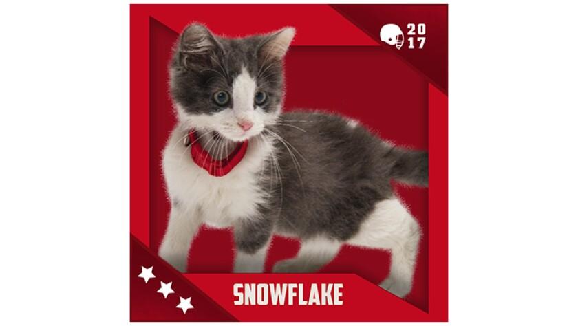 Kitten Bowl IV Emojis - Boomer's Bobcats - Snowflake