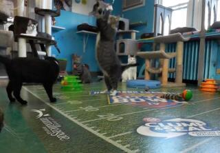 Kitten Cam Highlights - Warming Up - Kitten Bowl IV