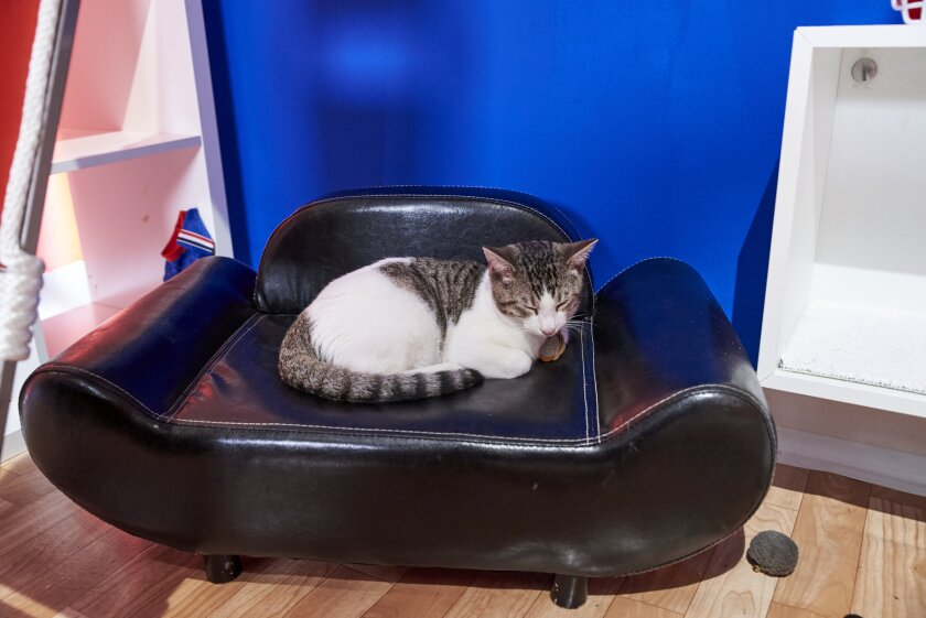 Photos from Cat Bowl - 6