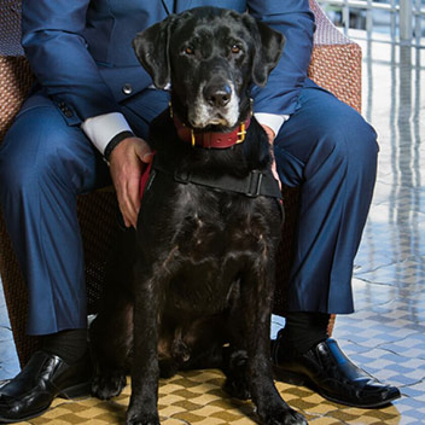 Military Dogs Category - Chaney