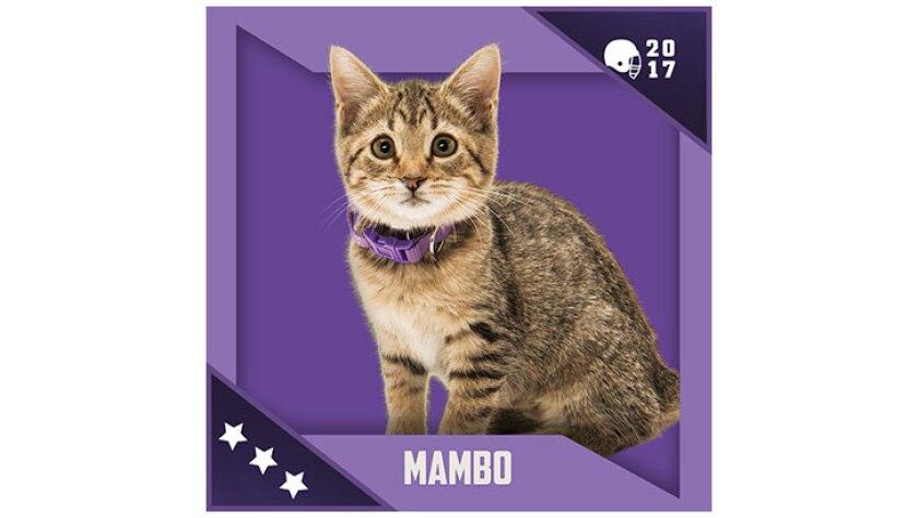 Kitten Bowl IV Emojis - North Shore Bengals - Mango
