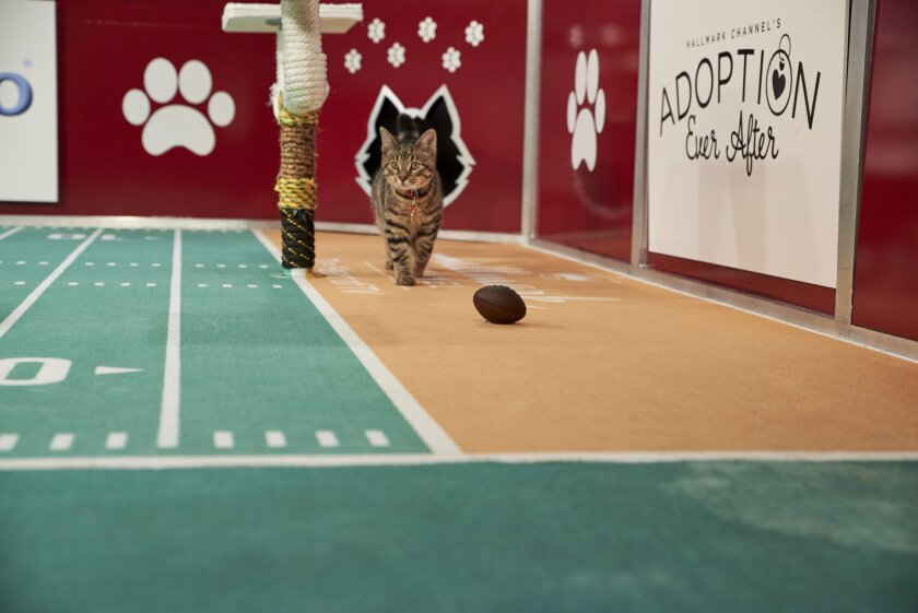 Photos from Cat Bowl - 2