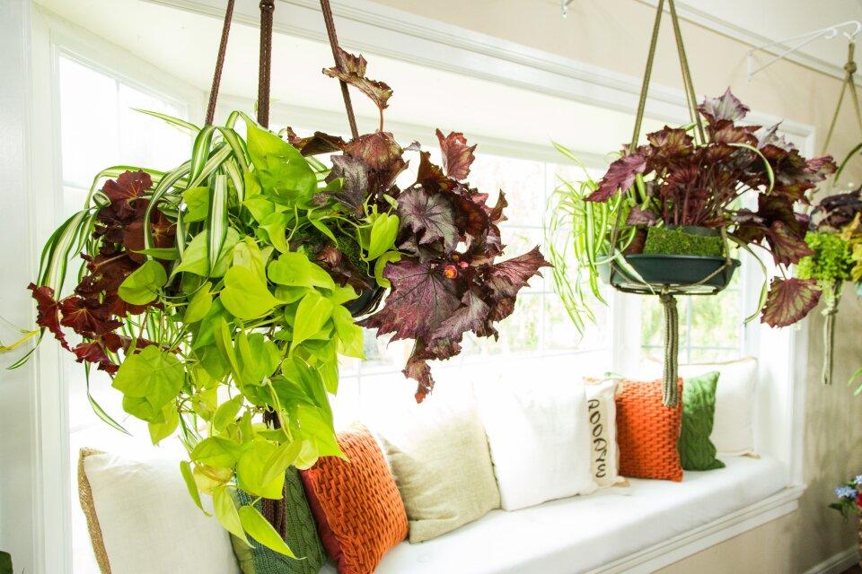 DIY Hanging Plant Combination