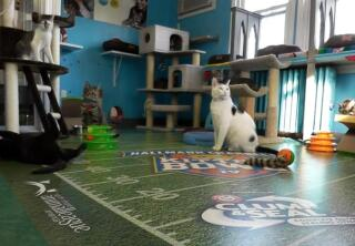 Kitten Cam Highlights - More Playtime - Kitten Bowl IV