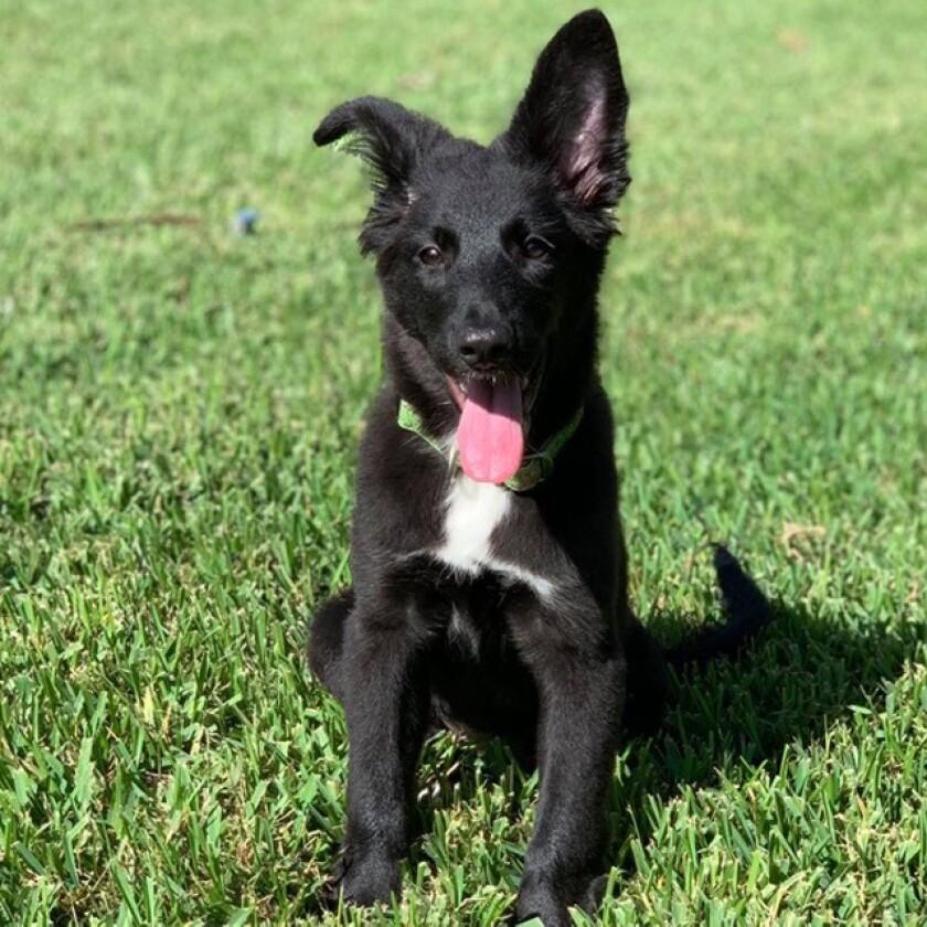9056_Pet_Adoption_Trisha.jpg