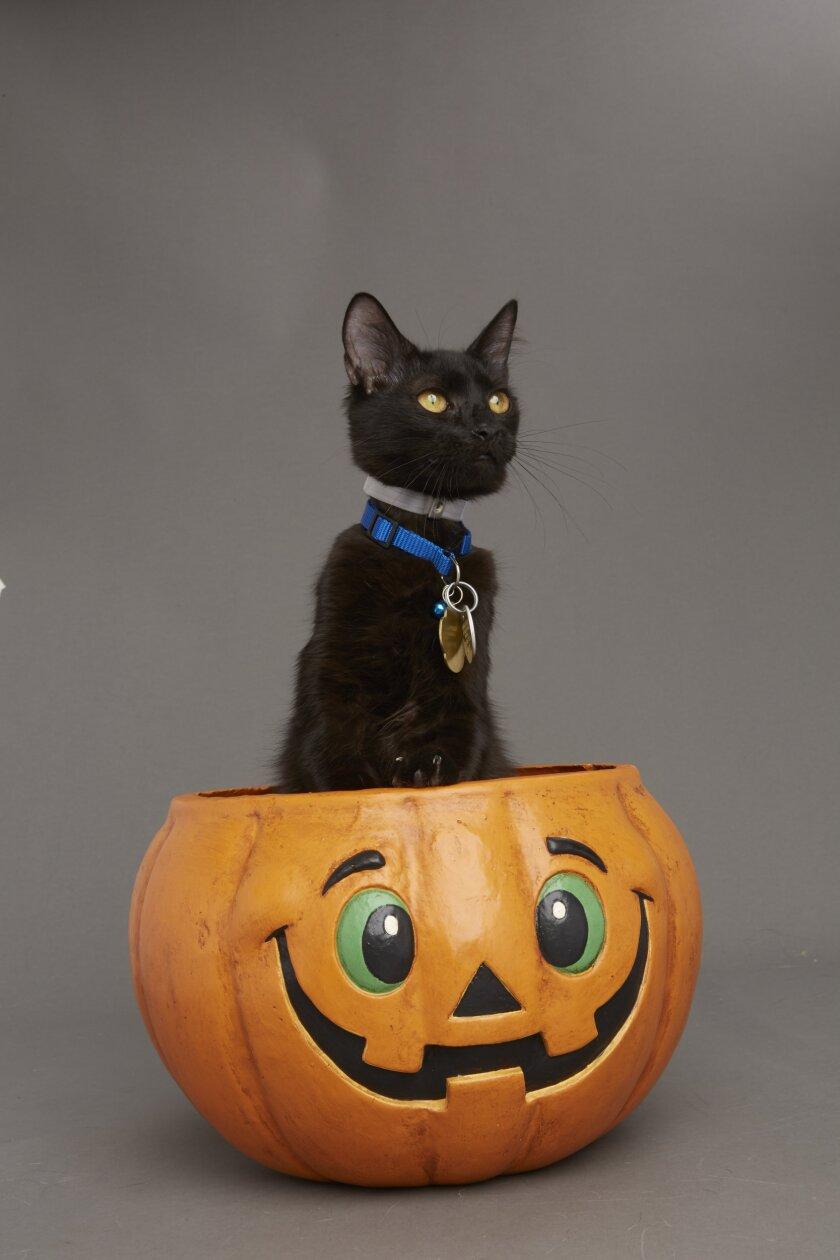 Kitten Bowl VI: Fall Kittens - 1