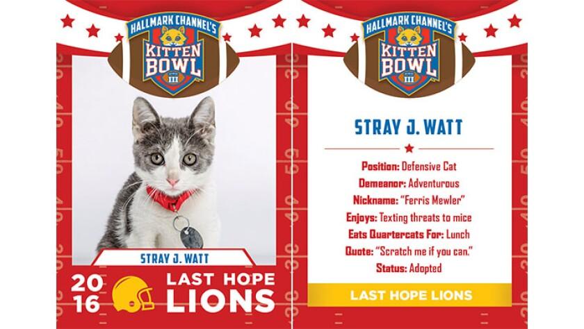 StrayJWatt-lions-KBIII.jpg