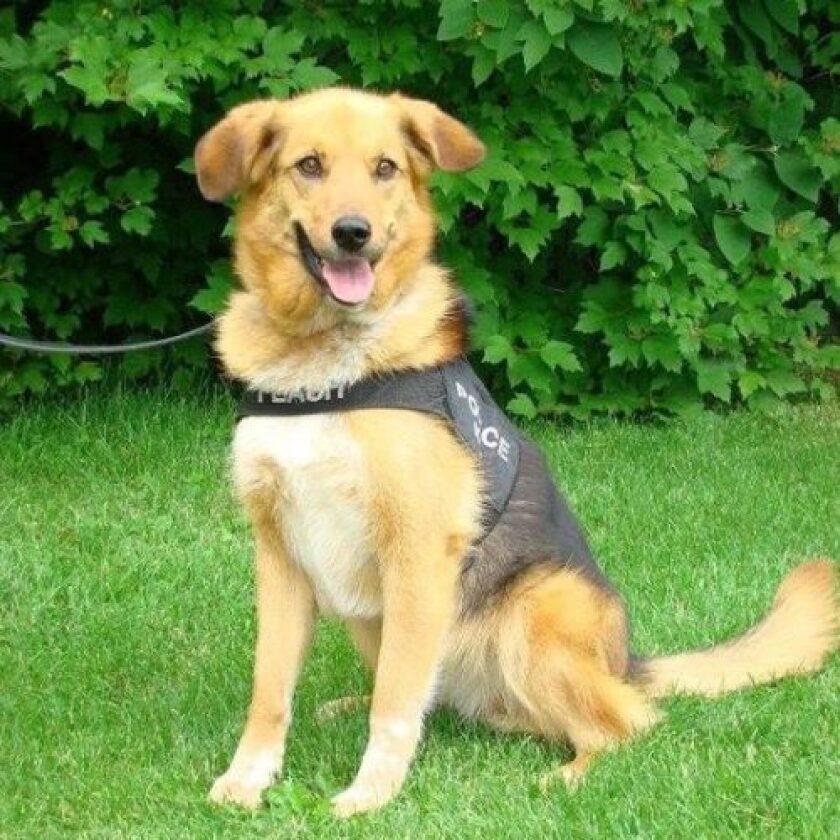 American Humane Hero Dog Awards 2018 Finalist - K-9 Flash - Law Enforcement/Arson