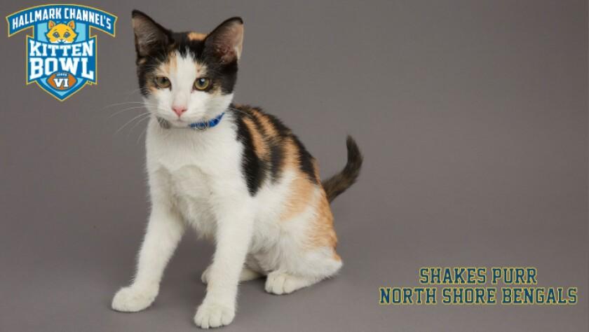 NB-Shakes-Purr-meet-the-kittens-KBV_tmp653377265.jpg