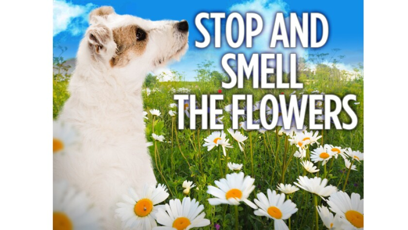050216-stop-and-smell-the-flowers.jpg