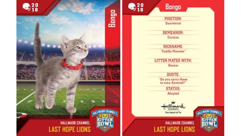 Kitten Bowl Trading Cards - Last Hope Lions - Bongo