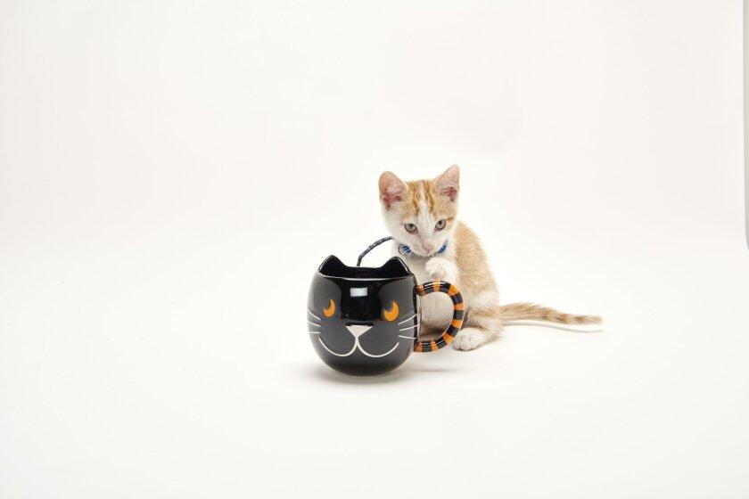 Kitten Bowl's Fall Celebration - 17