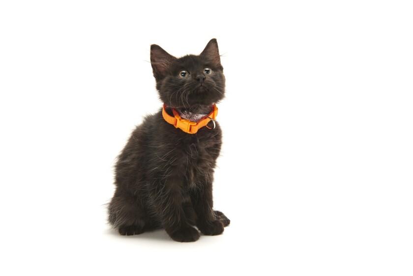 Kitten Bowl IV Photos - Home & Family Felines - 1