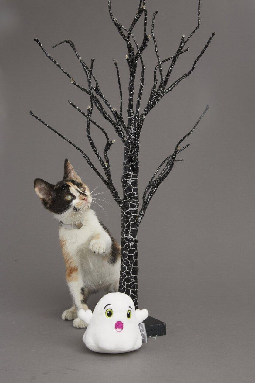 Kitten Bowl VI: Fall Kittens - 3