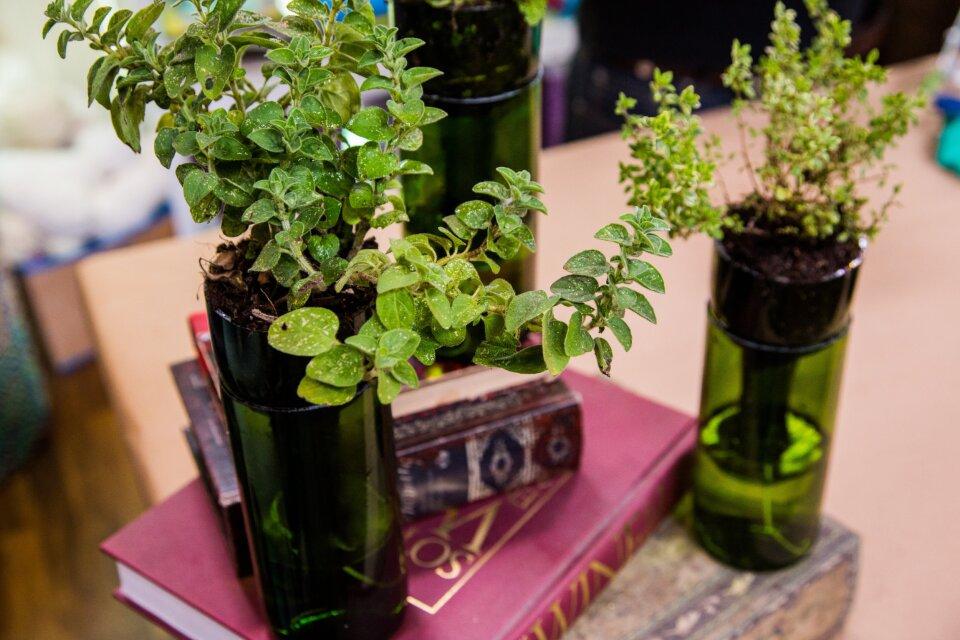 Self-Watering Wine Bottle Planters