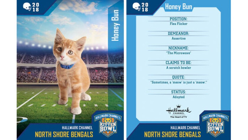 honey-bun-north-shore-bengals-card.jpg