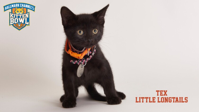 meet-the-kittens-KBV-LL-Tex.jpg