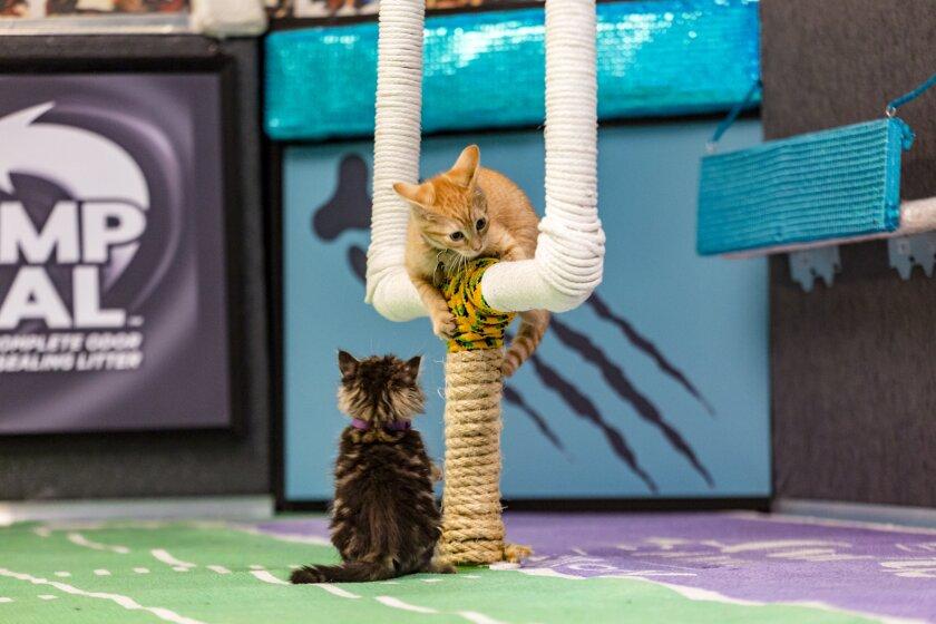 KittenBowl3_0019.jpg