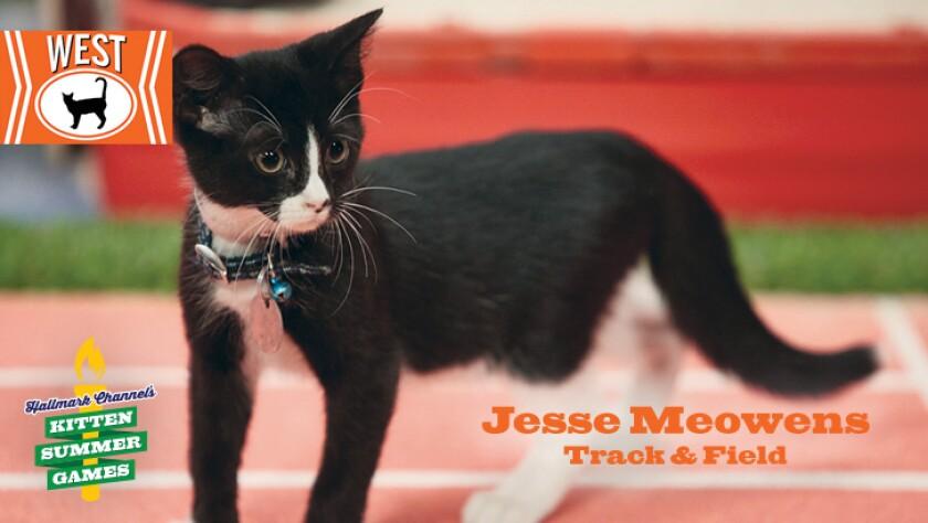 KittenSummerGames_726x410_JesseMeowens.jpg